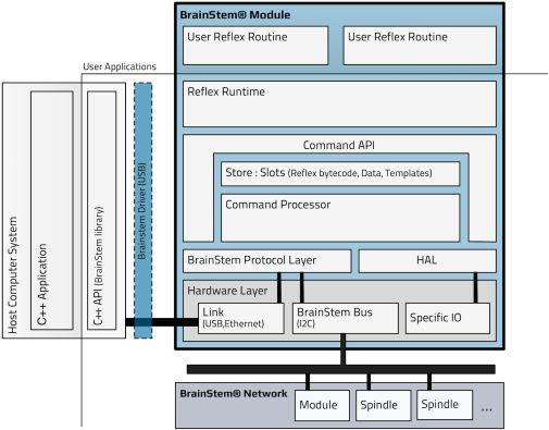 BrainStem Reflex diagram